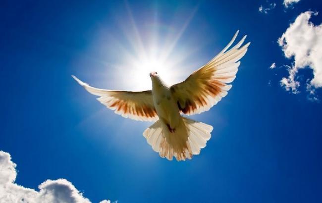 Фото: голубь - главный символ Благовещения
