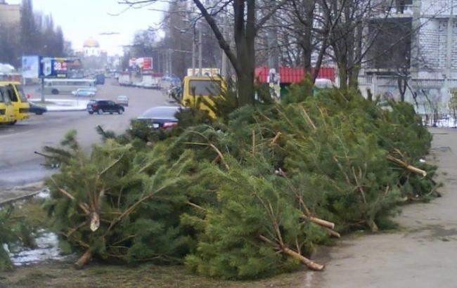 Фото: Новогодние елки
