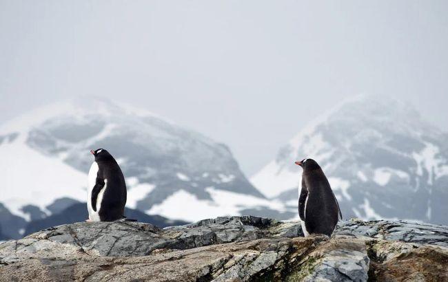 Антарктида стає різноманітнішою
