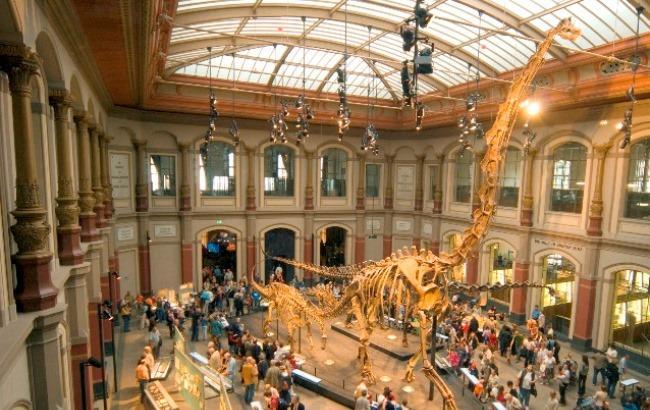Фото: Музей динозаврів в Берліні (InfoNIAC.ru)