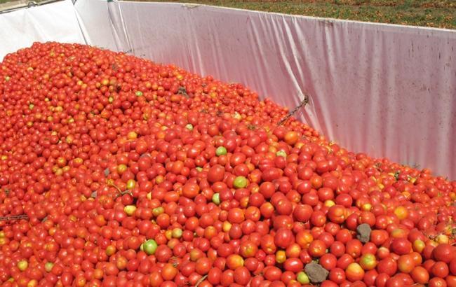 Водитель угнал задержанную в РФ фуру с санкционными томатами обратно в Беларусь