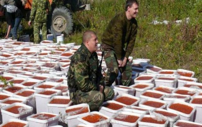 У Росії знищили чотири тонни червоної ікри