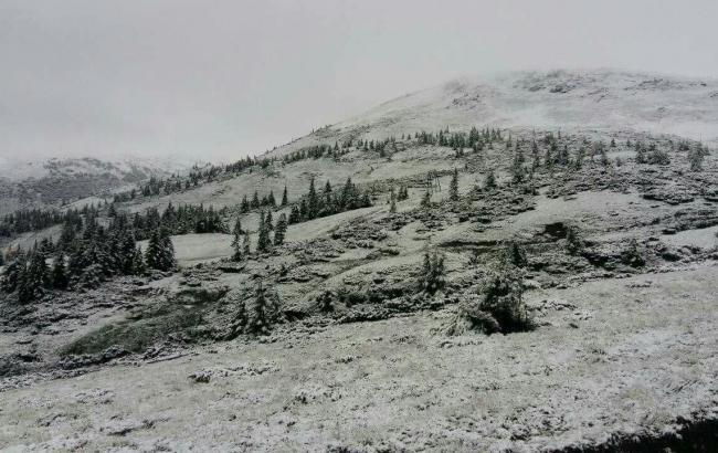 Фото: снег в Карпатах (moskal.in.ua)
