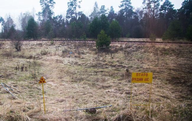 В Чернобыльской зоне крупное предприятие собирало радиоактивный урожай