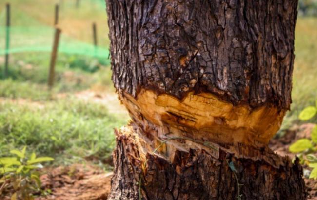 Фото: У Києві рубають дерева (flickr.com)