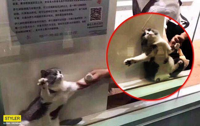 Счастливоеместо кота-интроверта: сеть умилило трогательное фото
