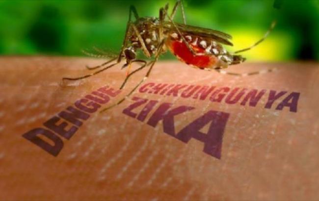 Фото: переносчиками вируса считают комаров