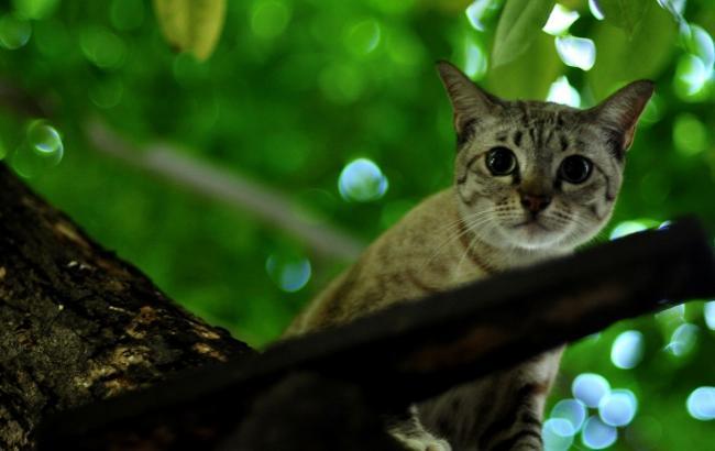 Фото: Кот на дереве (flickr.com)