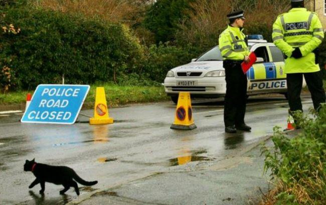 Фото: Розслідування вбивства кішок в Лондоні