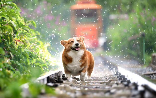 """Вчені зафіксували неймовірну реакцію собак на фразу """"я тебе люблю"""""""