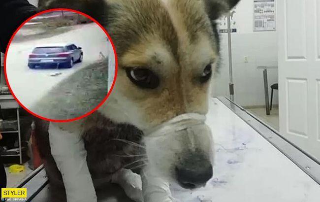 Чиновник-шкуродер протягнув на авто собаку: нові подробиці