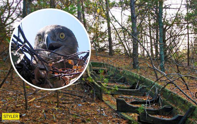 В Чернобыле показали редкостную птицу, которая проглатывает змею целиком