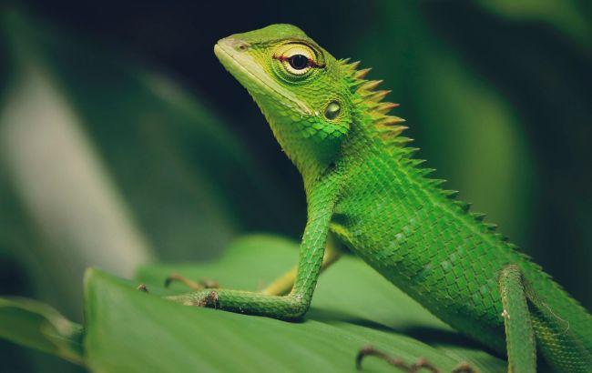 Вчені назвали тварину, яка може захистити людину від небезпечного вірусу
