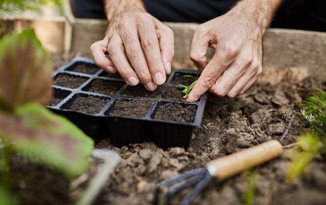 Місячний посівний календар на березень 2021: коли і як правильно посадити розсаду
