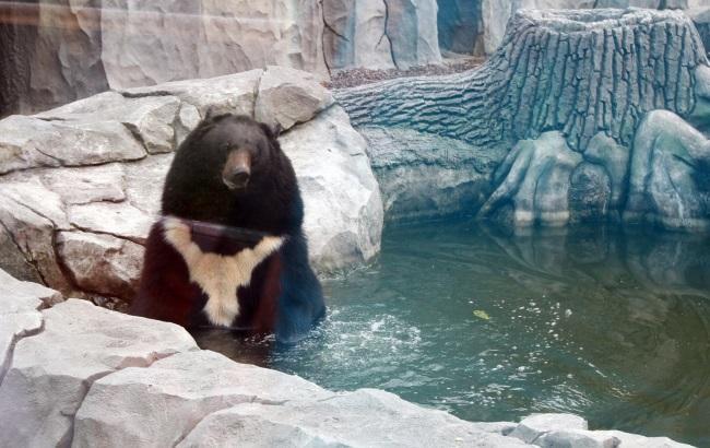 Фото: Бура ведмедиця Бона