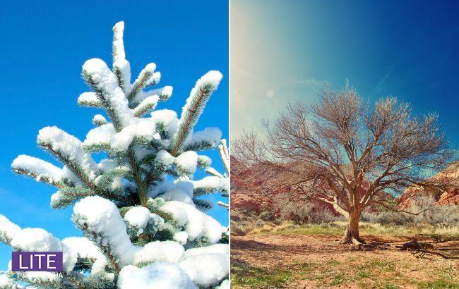 Тропическое лето и контрастная зима: прогноз погоды на 2021 год от народного синоптика