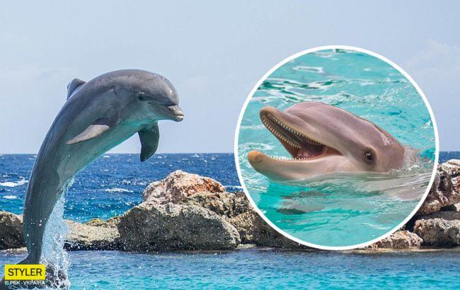На курорте под Херсоном дельфины танцевали возле отдыхающих: восхитительное видео