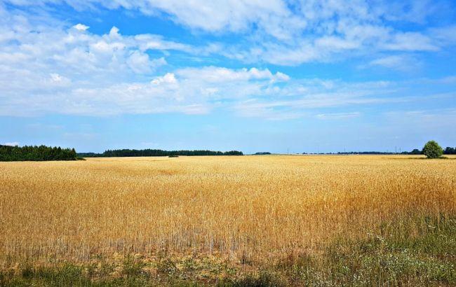 Названа средняя стоимость продажи земли за первый месяц после старта рынка