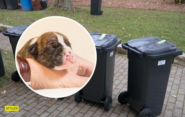 В Киеве новорожденного щенка выбросили на мусорку: неравнодушные просят о помощи