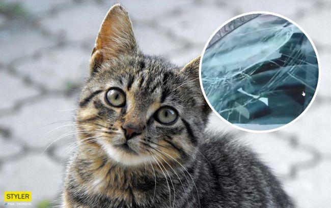 """""""Звіропад"""": у Дніпрі кіт """"вийшов погуляти"""" і розбив іномарку (відео)"""