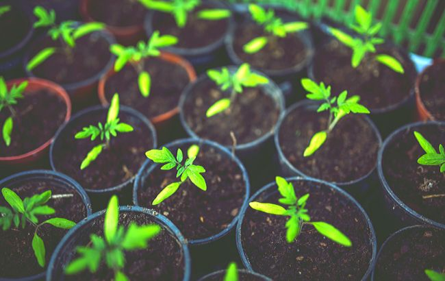 Місячний календар на березень: що і коли садити для великого врожаю