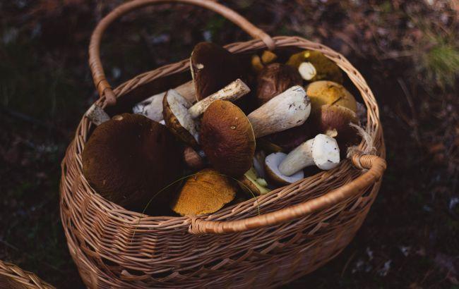 Грибной сезон в октябре: где в Украине можно собрать полные корзины