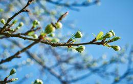 До +20 и солнце: в каких областях погода порадует украинцев теплом