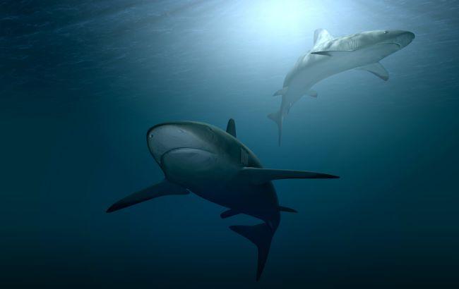 Как выглядела доисторическая акула, которая жила 300-400 миллионов лет назад (фото)