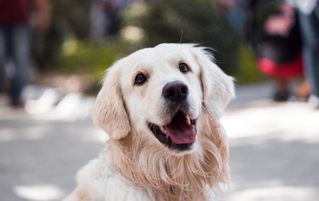 Кращий друг людства: собаки можуть допомогти зупинити пандемію коронавірусу