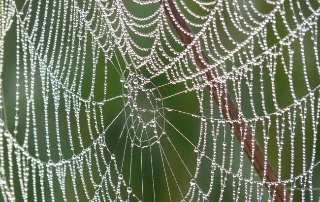 У Харкові помітили гігантських павуків: де живуть і як виглядають (фото)