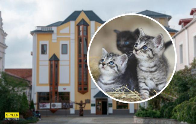 """В Виннице в музее поселились котята: животных раздают с """"приданым"""" (фото)"""