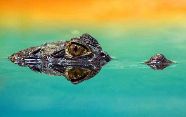 Болотний король: вчені знайшли гігантського доісторичного крокодила