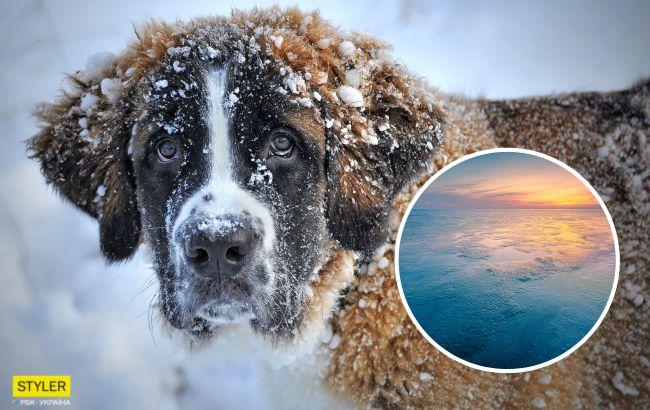 У Києві чоловік ризикнув життям заради пса, який провалився під лід: зворушливе відео