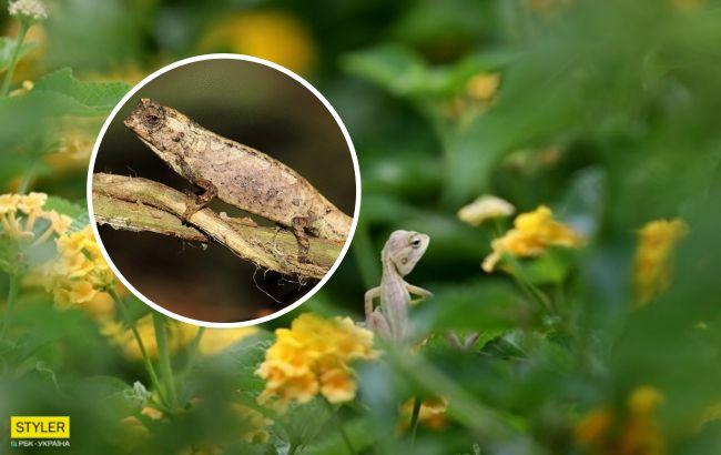 Вчені відкрили найкрихітніший вид рептилій: зворушуючі фото