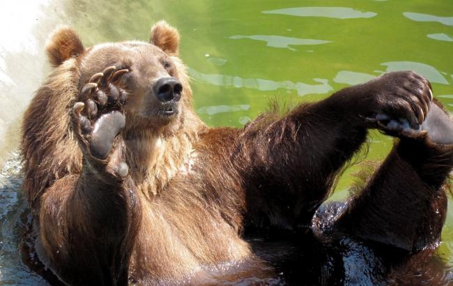 Фото: Медведь (Дом Солнца)