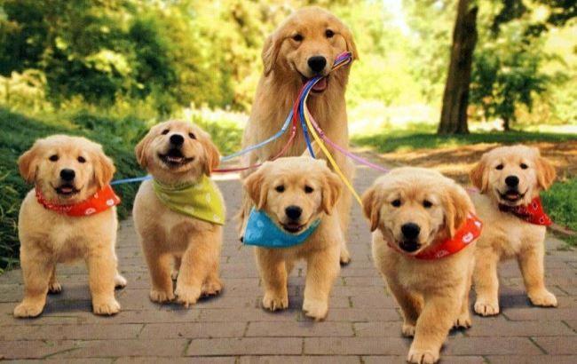 Фото: Собаки (gazeta.lviv.ua)