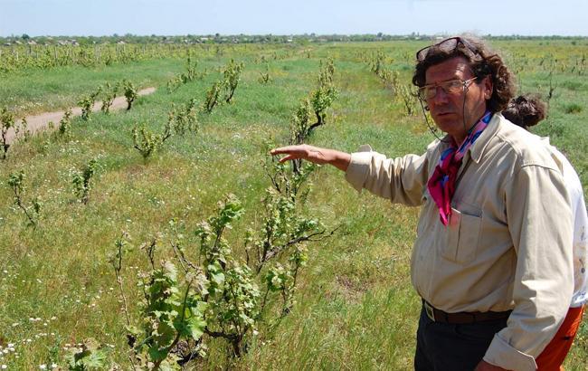 Фото: Крістоф Лакарен на власних виноградниках (SaleUP)