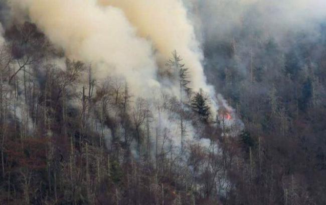 Фото: лесной пожар в Теннесси