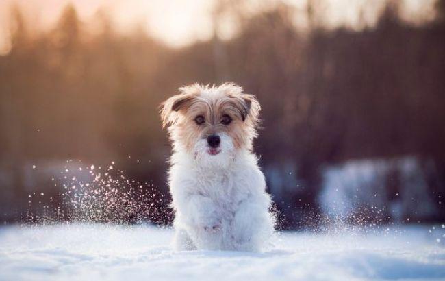 Погода на сегодня: по всей территории Украины снег, температура до +4