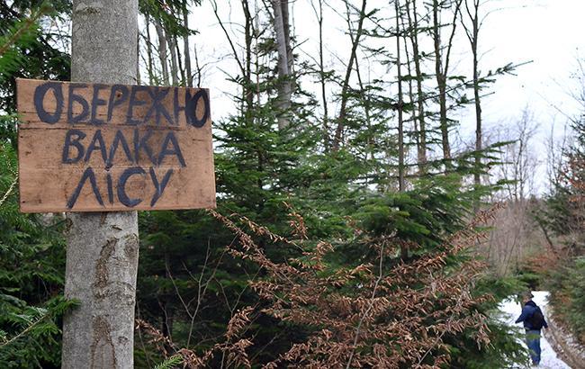 Украинский лес, не смотря на запрет, продолжает вывозиться из страны