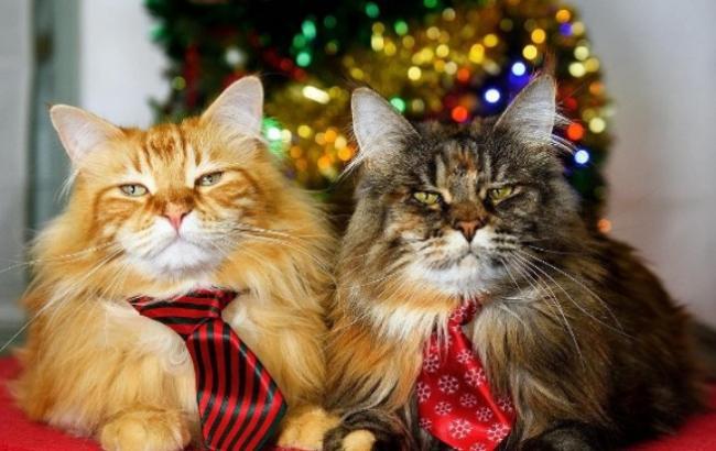 Рождественские песни котов