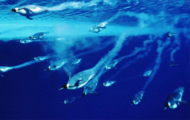 Фото: Океан (Coollady)