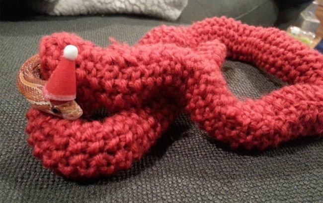 Дбайливі господарі для змії зв'язали зимовий светр