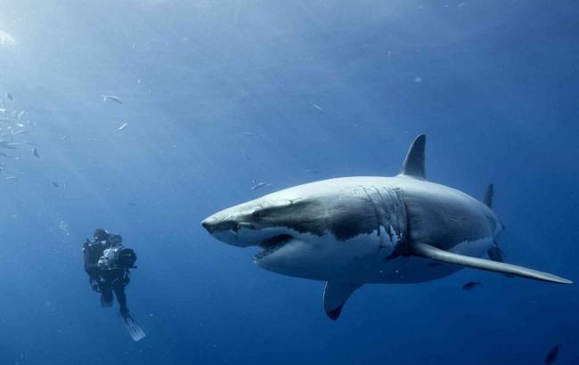 Фото: Нападение акулы (24smi.org)