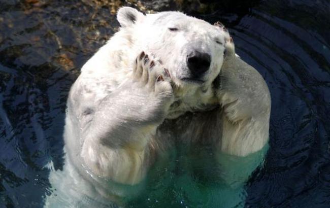 Фото: Белый медведь (Avivas.ru)