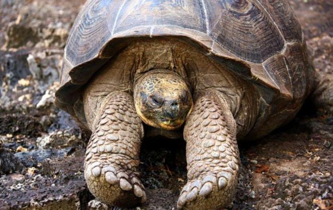 Фото: Велика черепаха