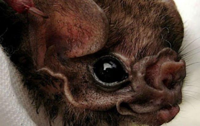 Фото: Летучие мыши-вампиры