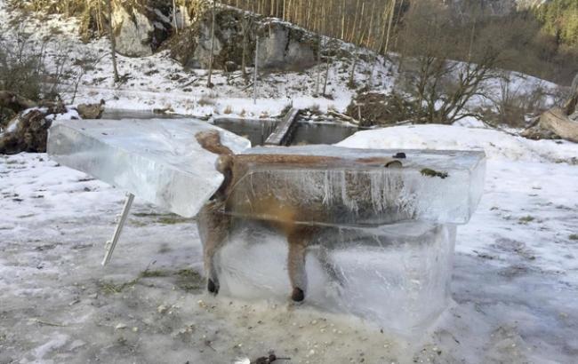 """Живцем замерзлу в річці лисицю """"пом'янули"""" в соцмережах"""
