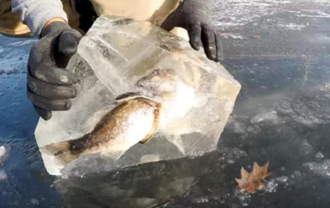 Фото: Щука с рыбой застыла во льду