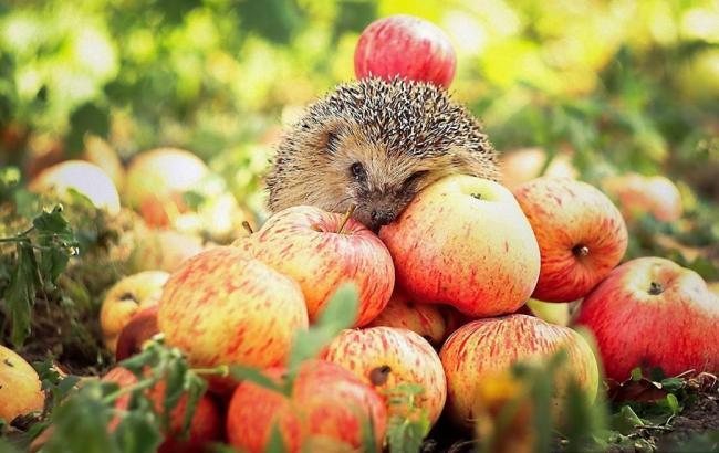 Фото: Яблоки